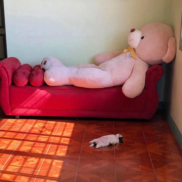 Adorable Puppy That Sleeps Like It's Done With Life Goes Viral