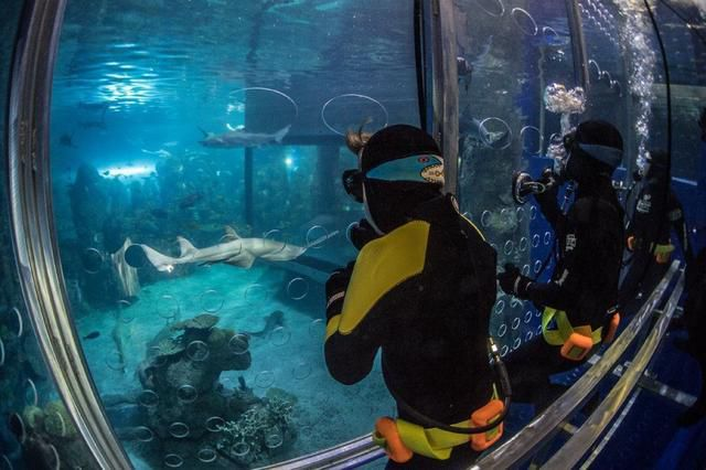 3 epic aquatic adventures across the U.S., including indoor swimming with whale sharks