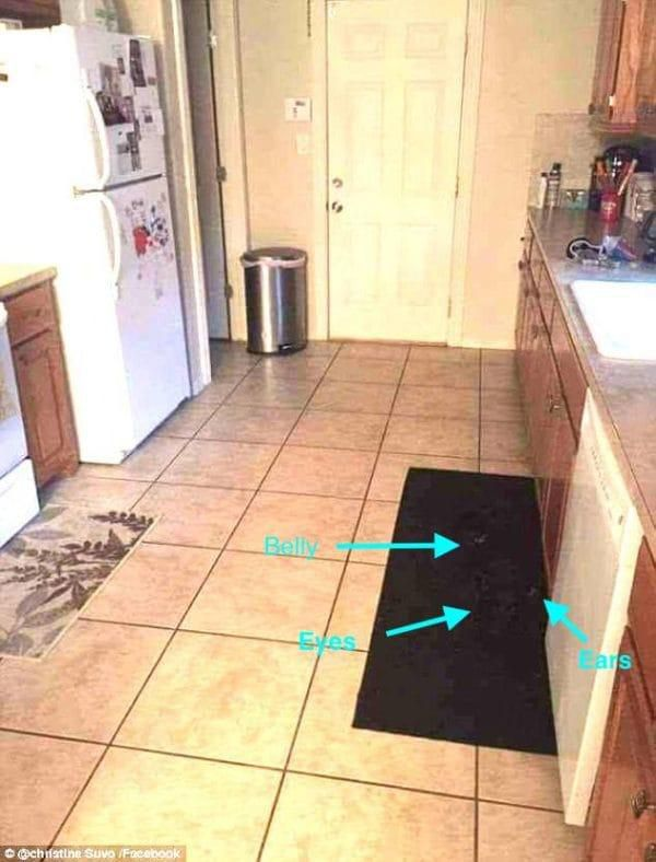 It's Nearly Impossible To Spot The Big Dog Hiding In This Photo Of An Ordinary Kitchen