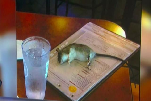 Customer Watched a Rat Fall from the Ceiling Onto Her Table at a Buffalo Wild Wings in LA