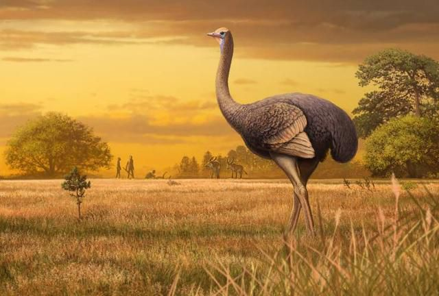 Two Million Years Ago, Humans May Have Been Eating 11-Foot