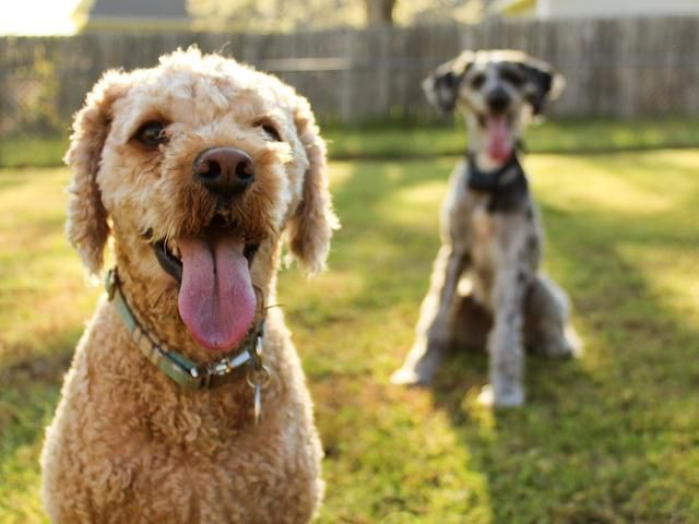 Don't Throw Away Your Dog's Poop for This One Reason