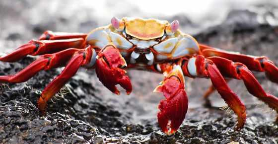 Types of Crabs: Different Kinds of Crabs from Around the World