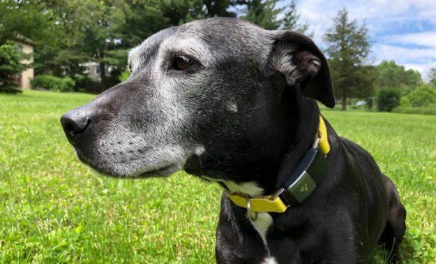 Geek Pick: Fi Smart Dog Collar Sniffs Out Your Pet