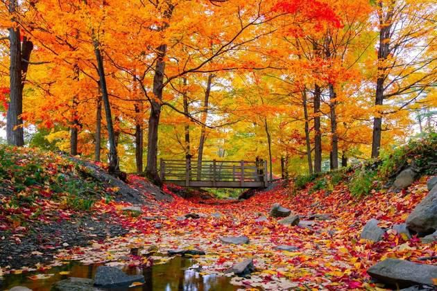 15 Road-Trip Stops to See the Best Autumn Colors