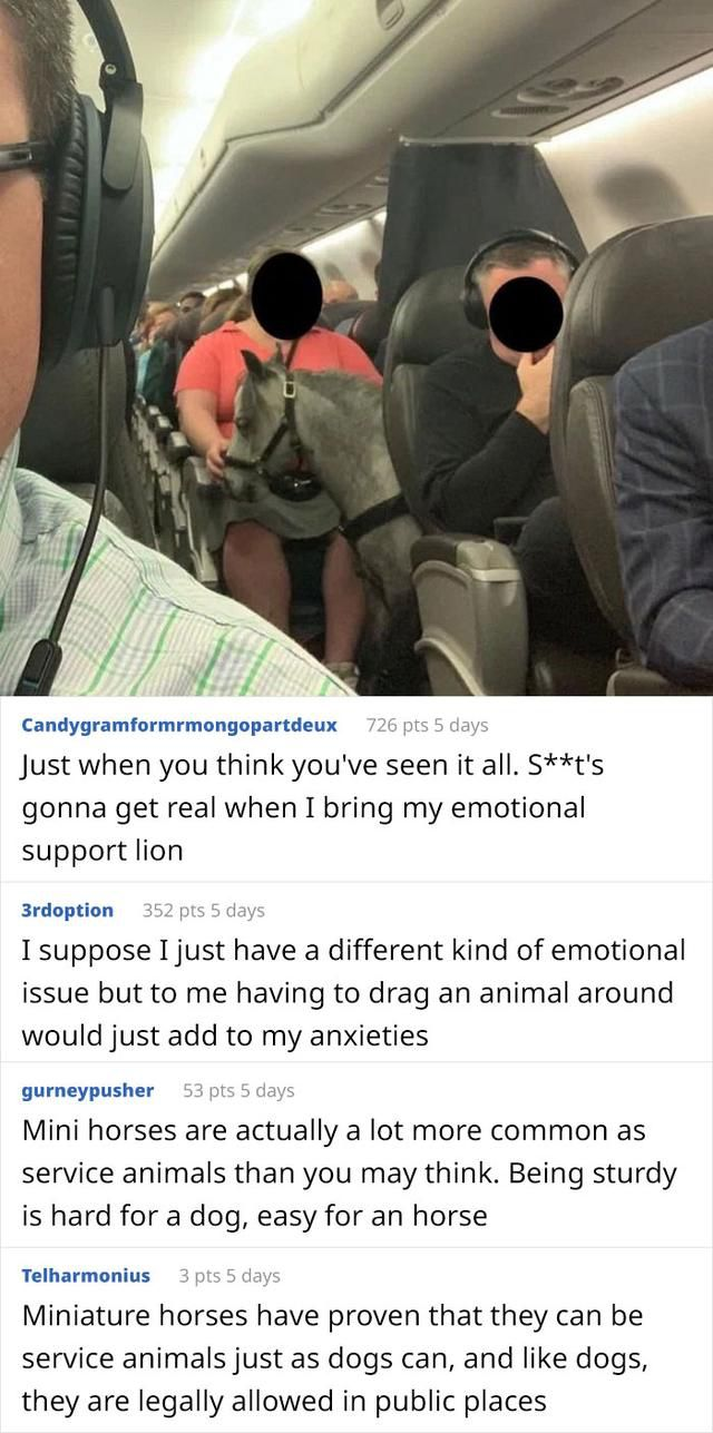 People Are Saying That These People Have Gone Too Far With Their Emotional Support Animals, Others Disagree (20 Pics)