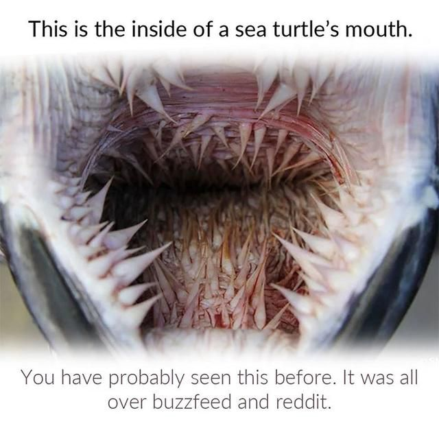 Pic Of A Sea Turtle's Mouth Is Going Viral, This Person Describes The Science Behind It