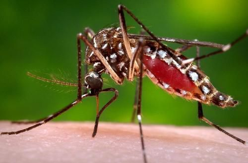 Brazil Experiment May Have Accidentally Created Genetically-Modified Super Mosquitos