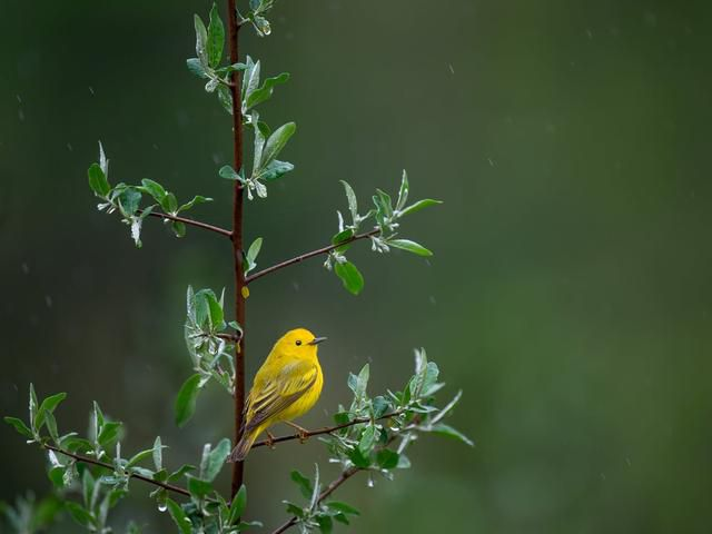 How did North America lose almost 3 billion birds in 50 years?