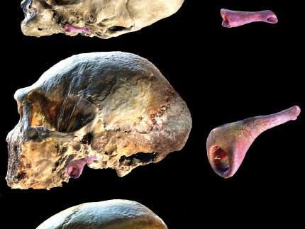 What killed the Neanderthals? Study posits a new theory