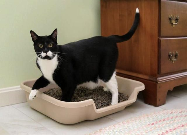 12 of the Best Cat Litter Boxes