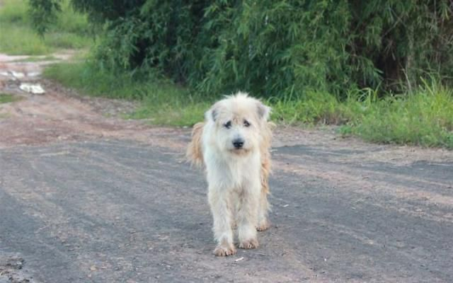 Lost Dog Stays In Same Spot for 4 Years Until His Owners Found Him Again