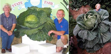 Biggest Fruits And Vegetables That Made The World Record