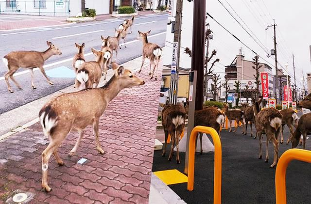Animals In Cities Due To Lack Of Human Presence