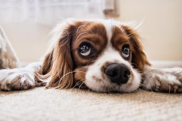 No, One Human Year Is Not Equivalent To Seven Dog Years