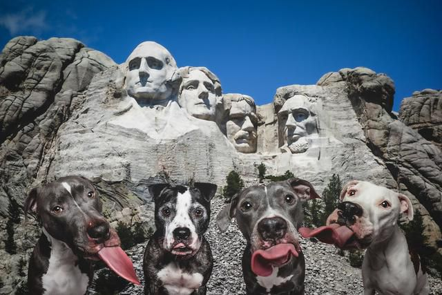 I Photoshop My Dogs All Around The World So They Can 'Travel' During This Quarantine