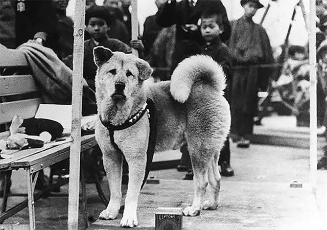 12 Heartbreaking Photos Of Hachiko, The Dog That Waited For His Owner For Years