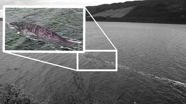 The New Loch Ness Monster Photo May Be a Fake-but the Mystery Endures