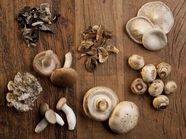 Mushrooms & Prostate Cancer