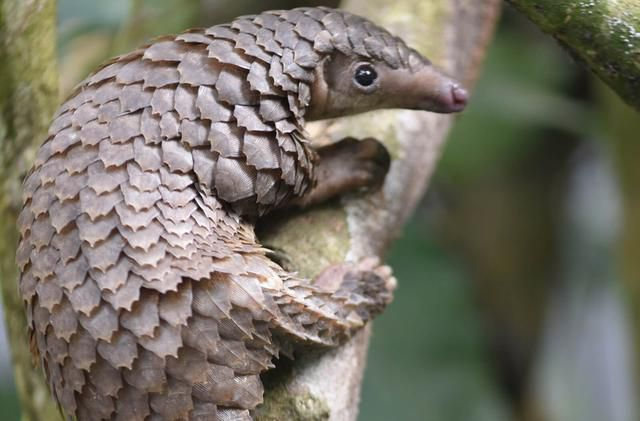 How did the coronavirus jump from bats to humans? Snakes, pangolins and turtles top suspect list