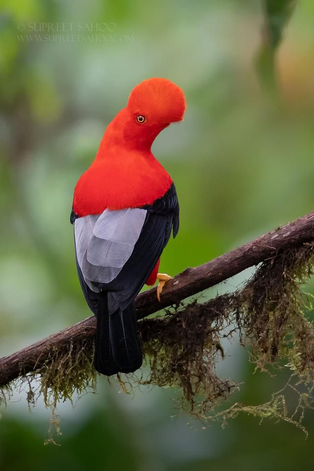Here Are My 31 Pictures Of Ecuador-Exclusive Exotic Birds And Other Animals
