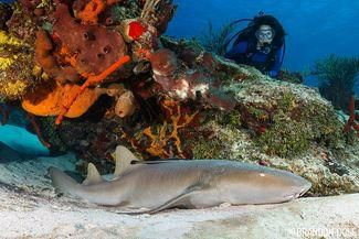 Five to Dive in Cozumel: A Photographer's Must Dive List