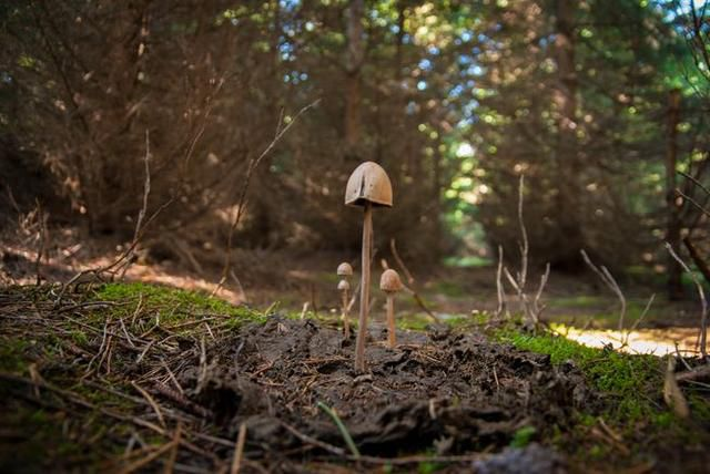 7 mind-bending facts about magic mushrooms