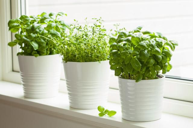 Everything you need to grow herbs at home