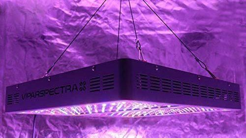 Best Grow Light for Indoor Plants