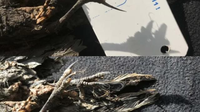 A frozen bird found in Siberia is about 46,000 years old
