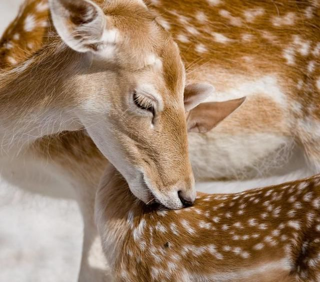 I Photograph Mothers' Love In The Animal World