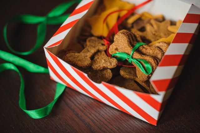 Easy-Peasy Christmas Cookie Recipes for Dogs