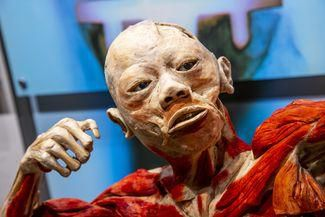 Get up close with real human bodies, organs at museum's 'Bodies Revealed' exhibit