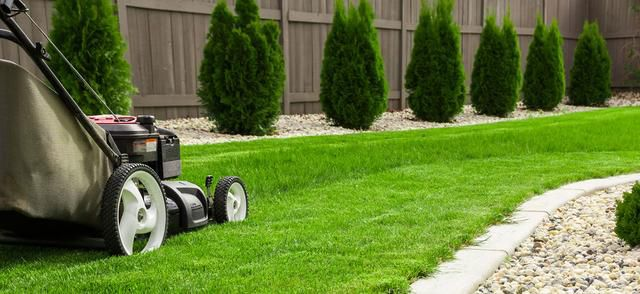 How to give your lawn a Wimbledon style makeover and turn the neighbours green with envy