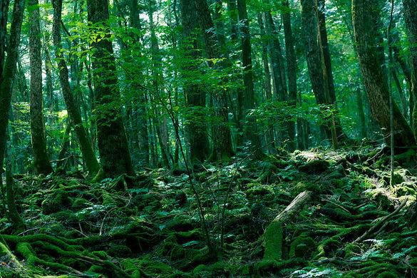 Inside Aokigahara Forest – Japan's Beautiful Yet Notorious Forest