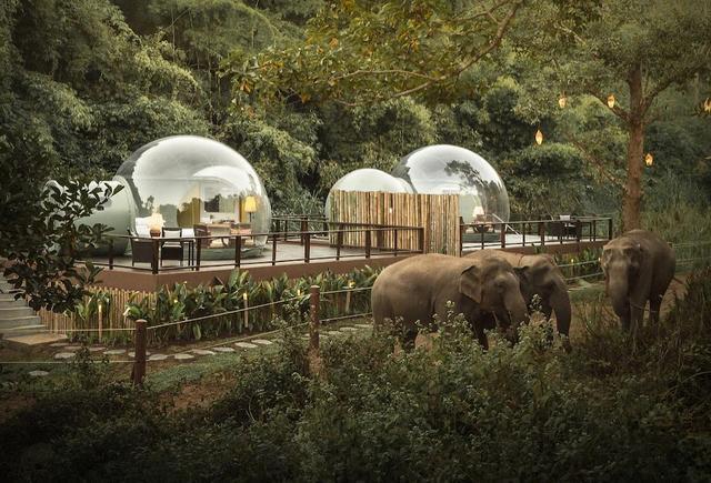 Au Naturel! Anantara Elephant Resort Transparent Jungle Bubble Rooms