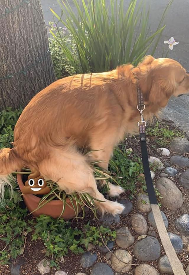 Someone Asks People If Their Dogs Also Take Dookies In Weird Positions And Dog Owners Respond