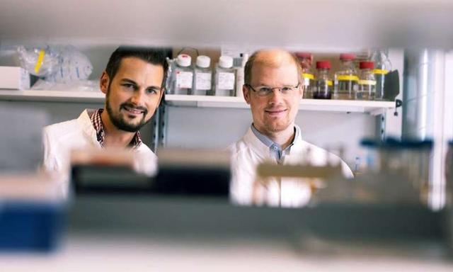 Master regulator of liver metabolism identified during infection