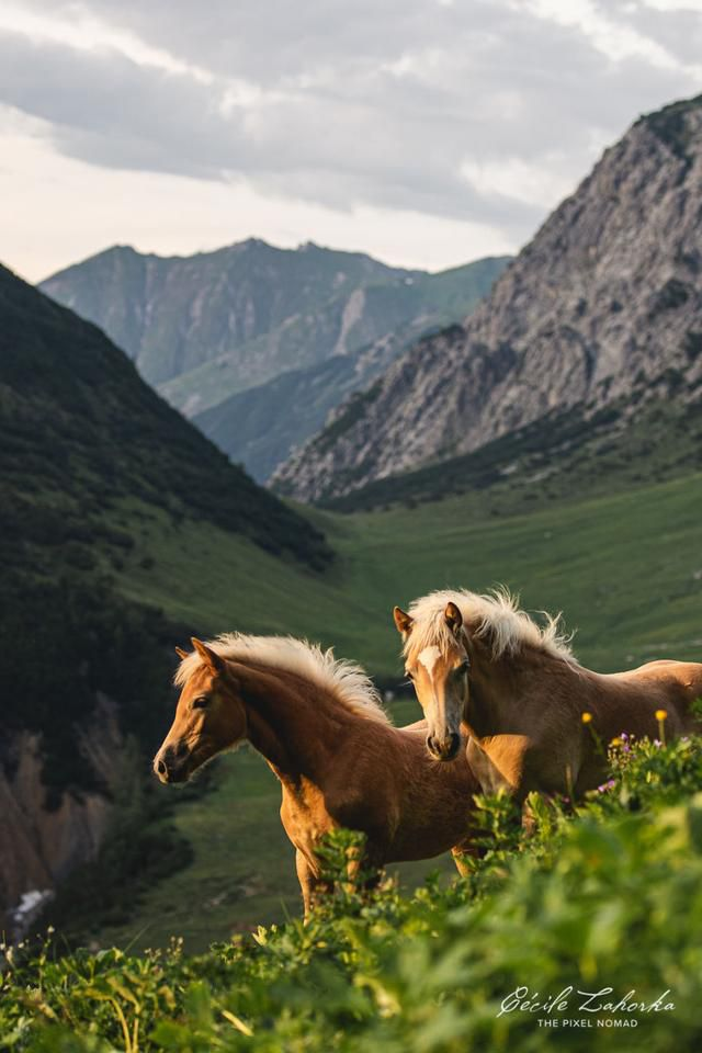 I Photograph Free Roaming Horses In Breathtaking Mountain Landscapes In The Alps