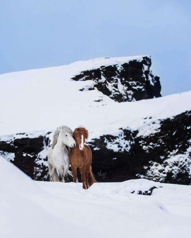 I Photograph Horses In Breathtaking Icelandic Landscapes