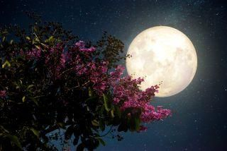 How to see tonight's pink supermoon, the largest full moon of 2020